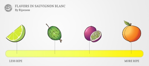 flavors-in-sauvignon-blanc-winefolly-com